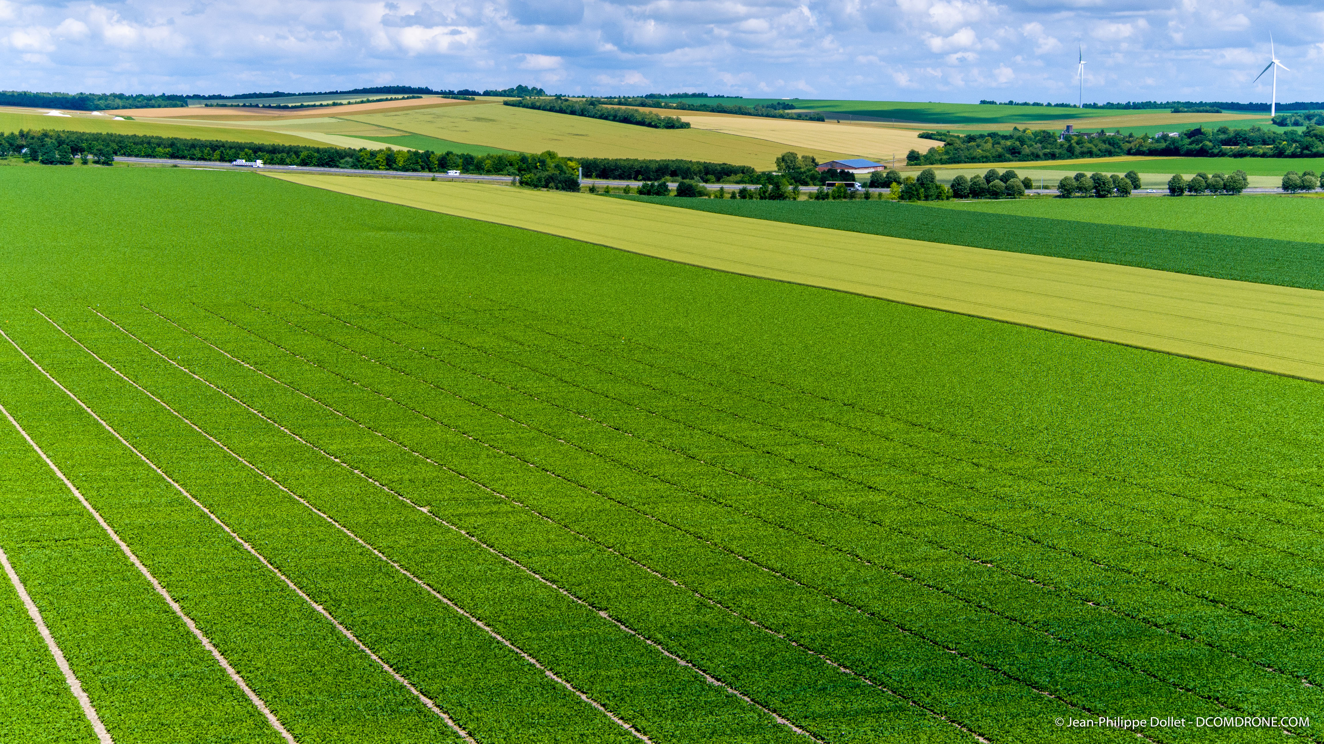 Precision farming. The drone at the service of high speed phenotyping.